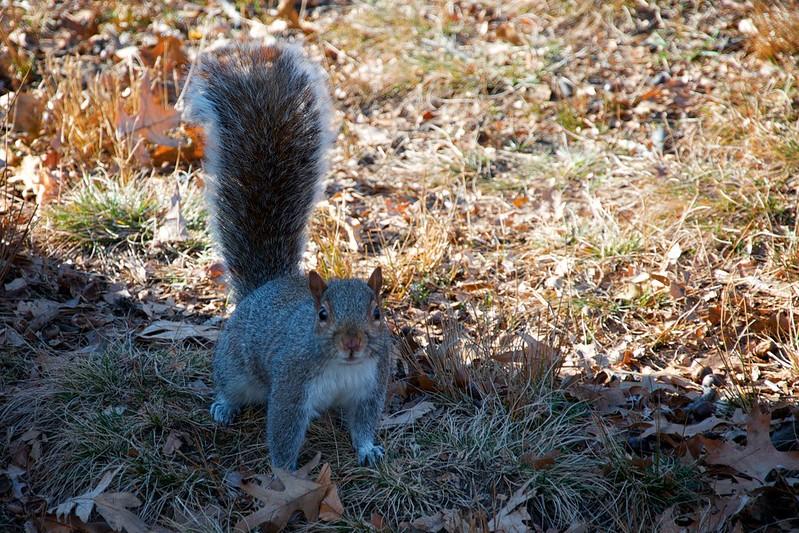 New York, United States