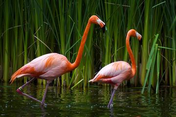 8-Days Luxury Safari in Arusha National Parks