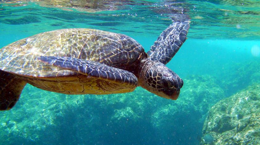 Philippines Snorkeling