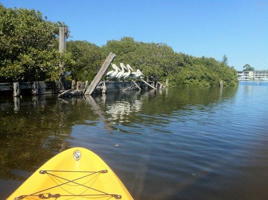 Hawks Nest Australia Kayak