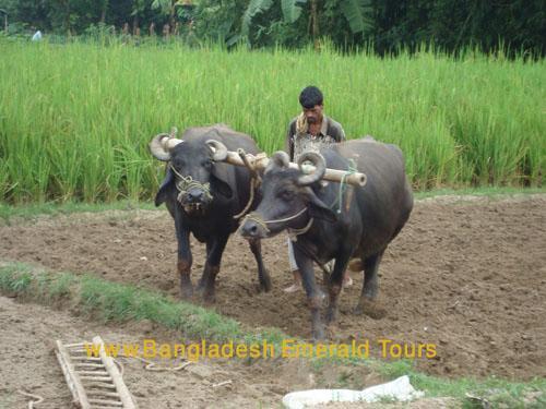 Dhaka City Bangladesh Tours