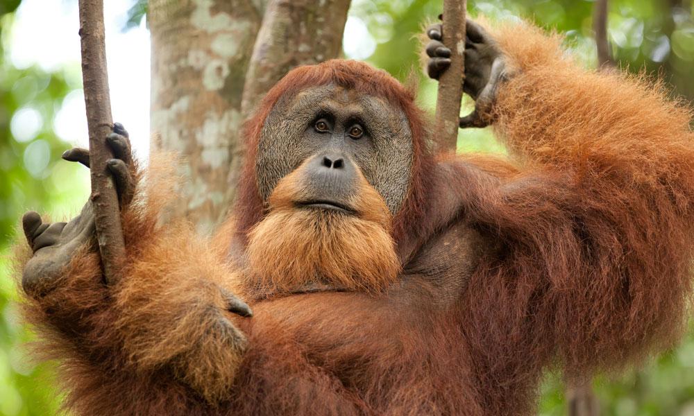 North Sumatra Indonesia Tours