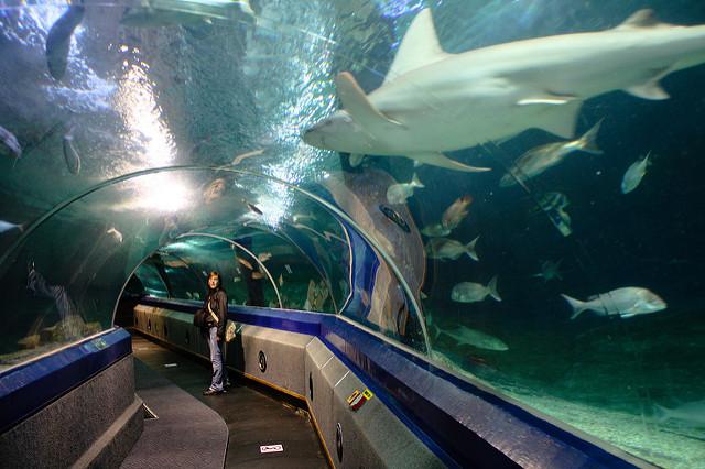 Australia Dive Trips