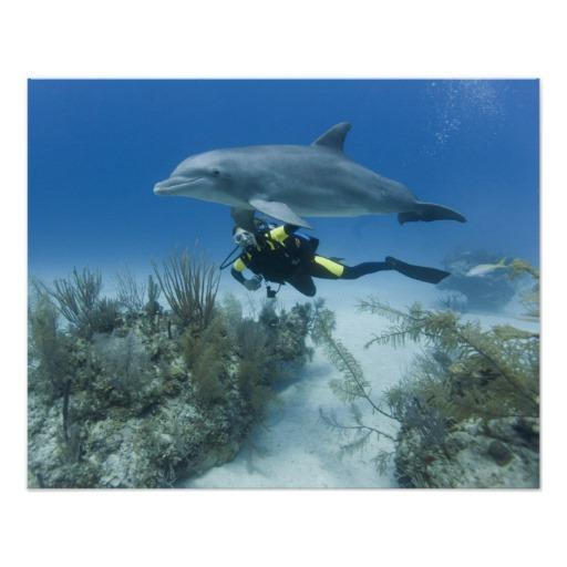 Bahamas Dive Trips