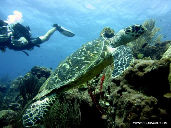 Curacao Dive Trips