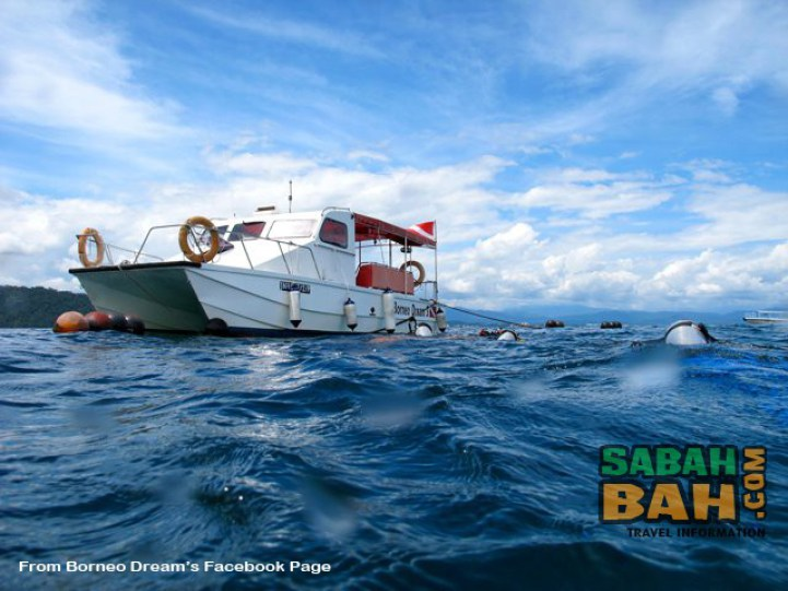 Sabah Dive Trips
