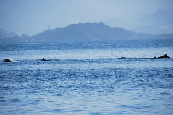 Brazil Snorkeling