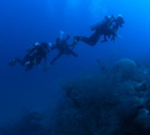 Colombia Dive Trips