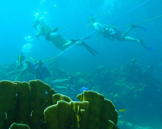 Jamaica Dive Trips