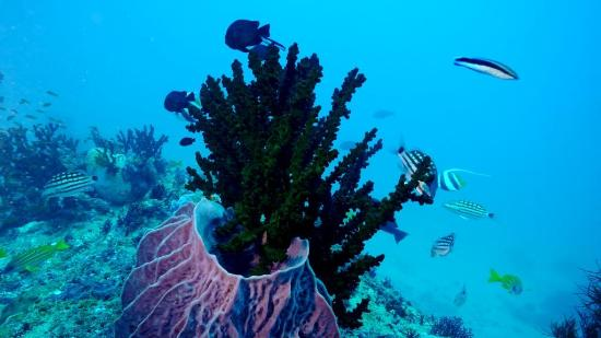 India Dive Trips