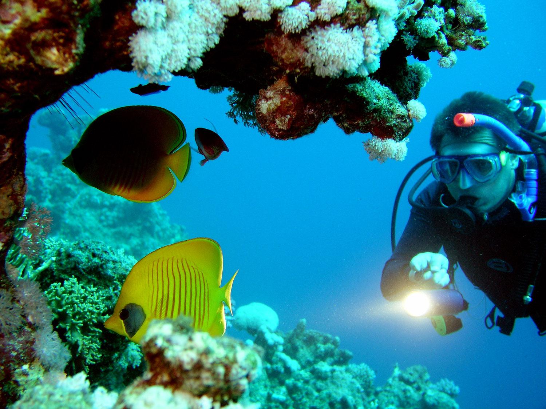 Puerto Rico Dive Trips