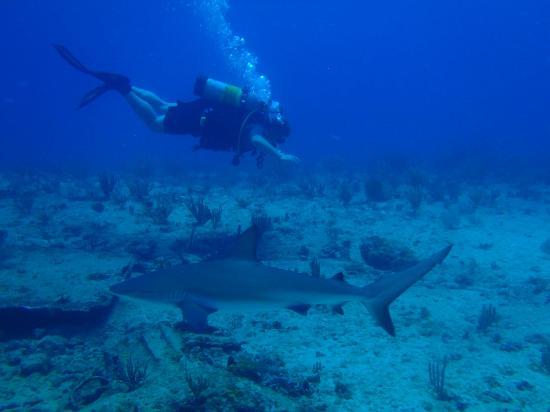 Sint Maarten Dive Trips