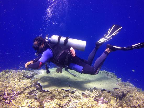 Fiji Dive Trips
