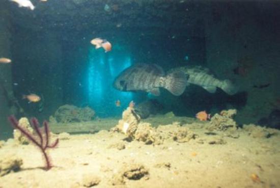 Sarawak Dive Trips
