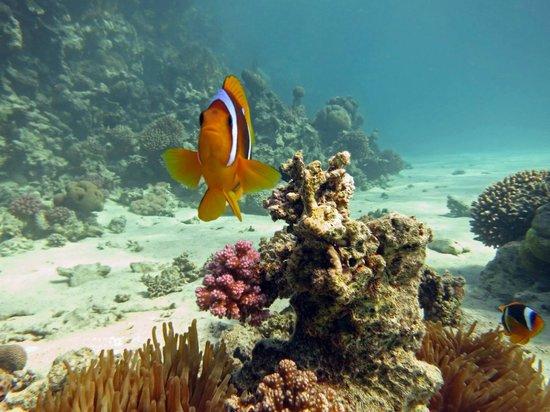 Egypt Dive Trips