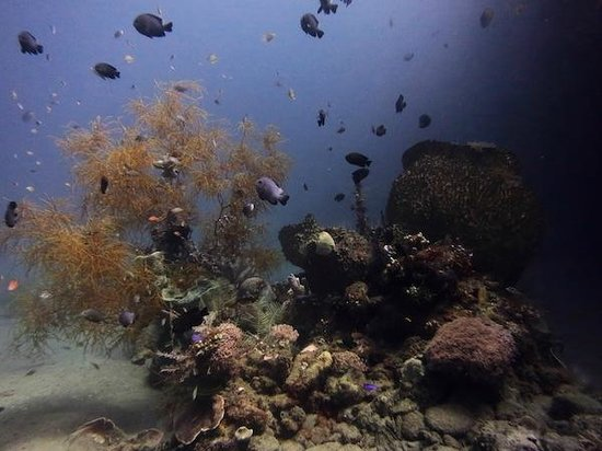 East Timor Dive Trips