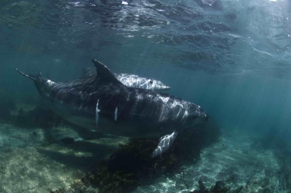 New Zealand Snorkeling