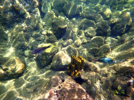 Dominica Snorkeling