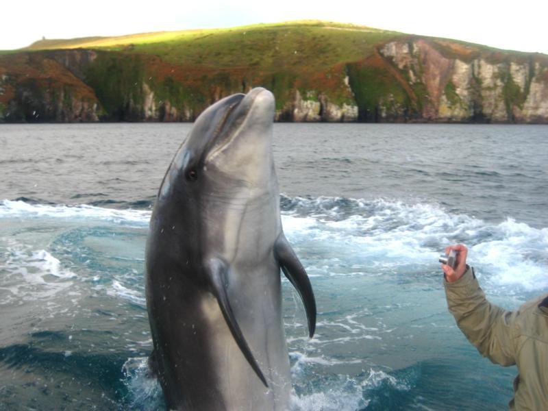 Dingle Ireland Tours