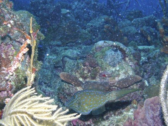 Barbados Dive Trips