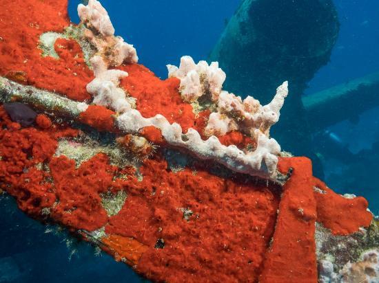 Aruba Dive Trips