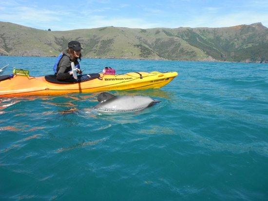 Akaroa New Zealand Kayak