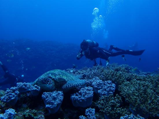 Japan Snorkeling