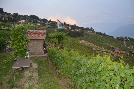 Switzerland Winery Tour