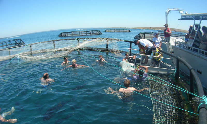 South Australia Swimming