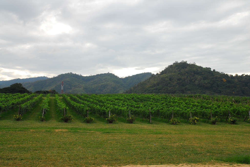 Thailand Winery Trips