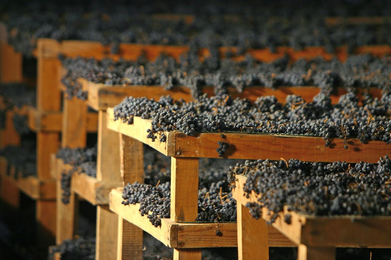 Armenia Winery Trips