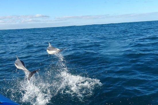 South Australia Boat Trips