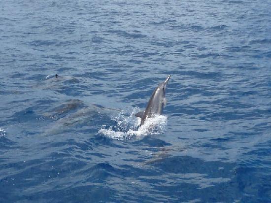 Mauritius Swimming