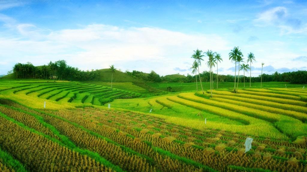 the rice myth bohol version