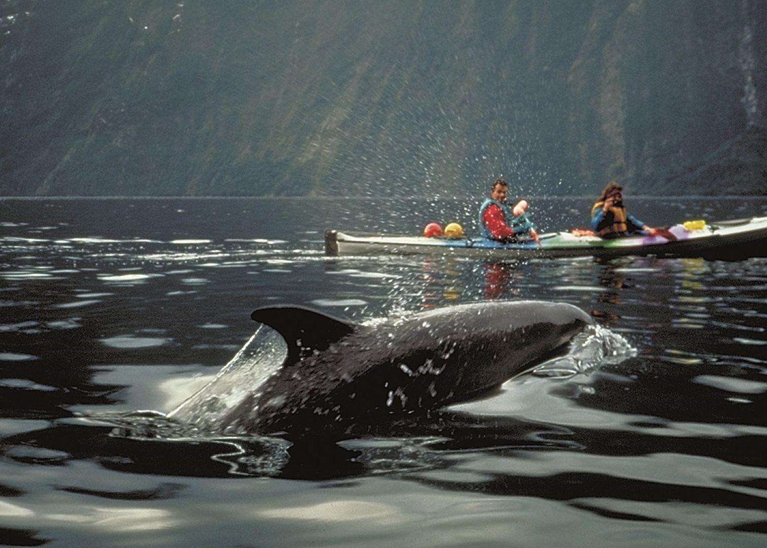 Manapouri New Zealand Kayak