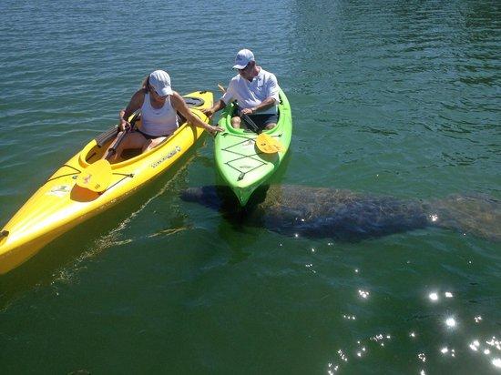 Happy Paddler Kayak Tours & EcoVentures United States Kayak