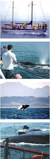 South Africa Boat Trips