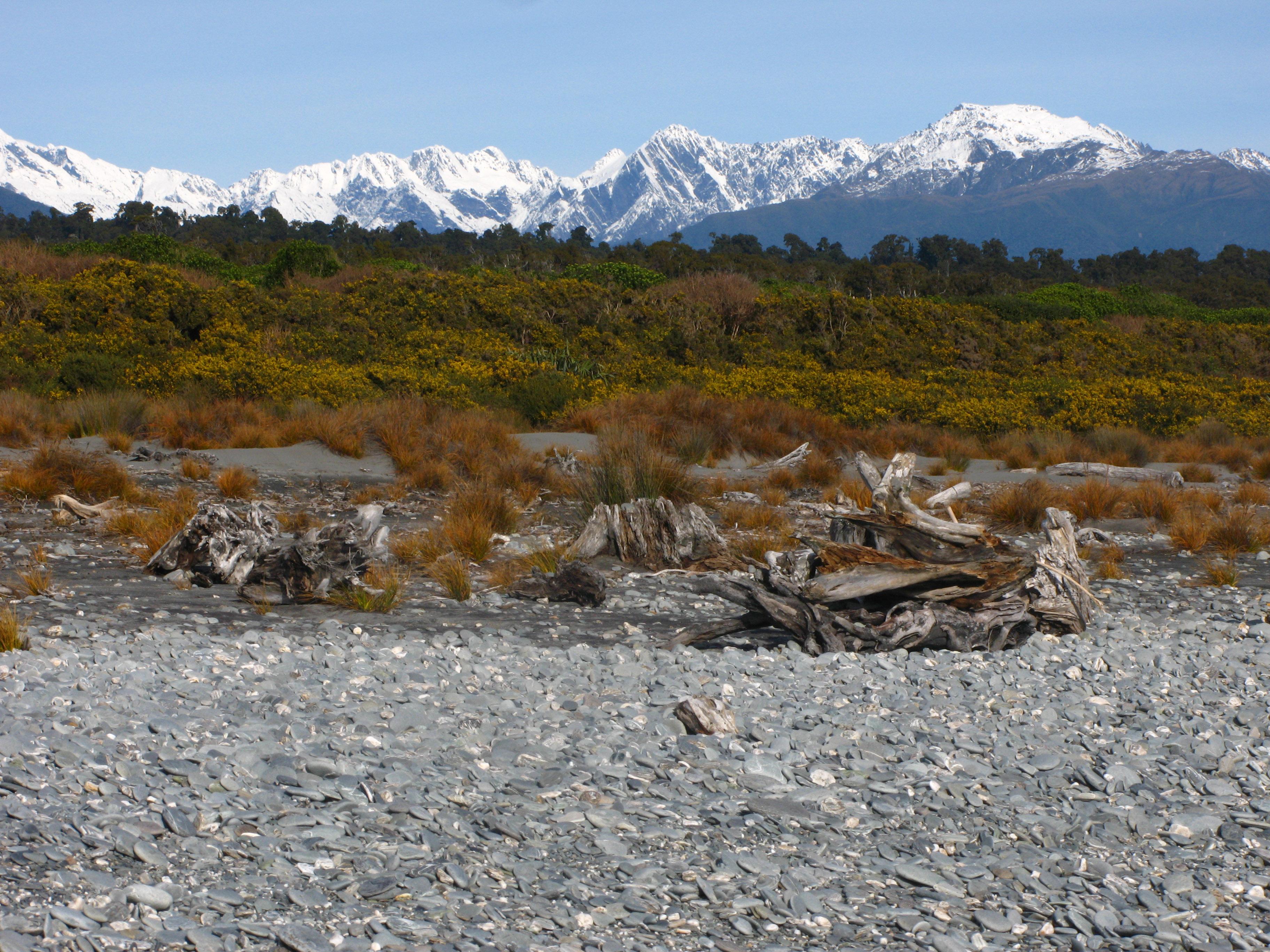 Fox Glacier New Zealand Beaches