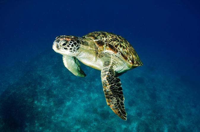 Malaysia Snorkeling